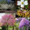 Tree & Shrub Variety Packs